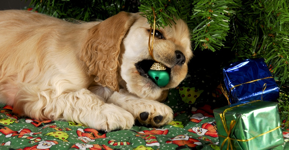 HolidayPetSafety